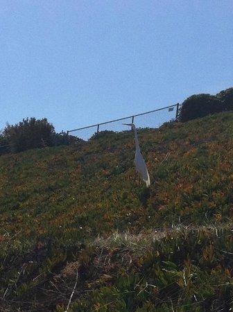 Rancho Bernardo Inn: On a walk