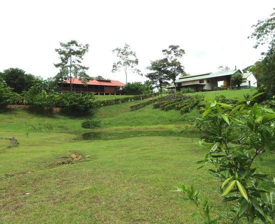 La Anita Rainforest Ranch : La Anita lodge and farm