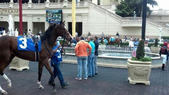 Gulfstream Park: Beautiful Horses.