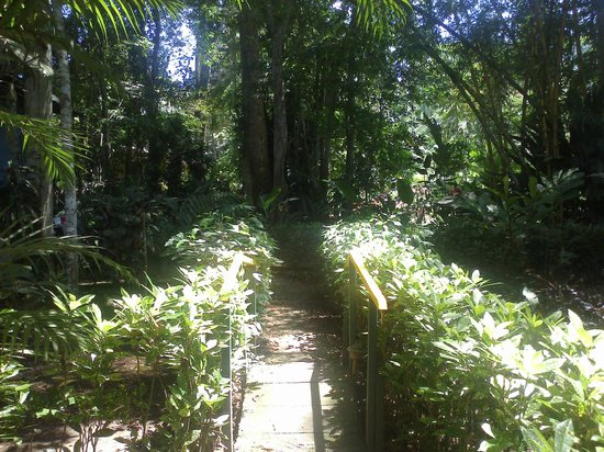 Cabinas Punta Uva: area cerca habitacion