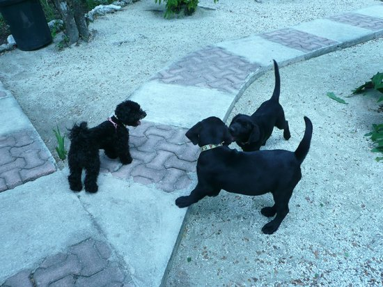 Villas El Encanto : PUPPYS AT PLAY