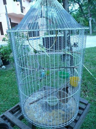 Villas El Encanto: ANA'S BIRDS