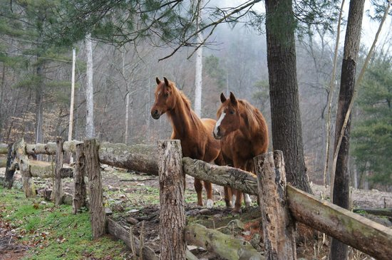 French Broad Outpost Ranch: Mars and his girlfriend