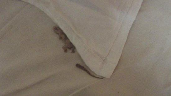 Brightlands Resort: Dead Lizard