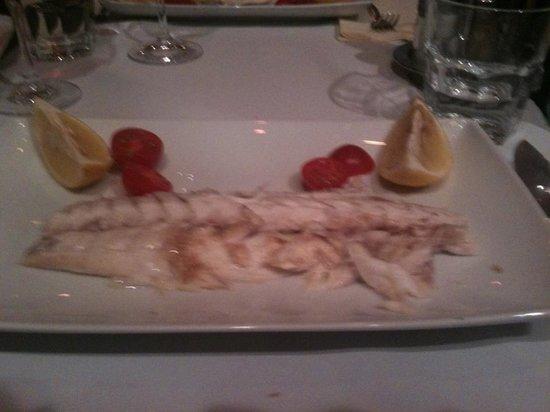 TG Italiano: Fish ...