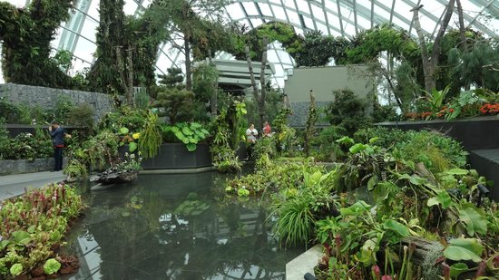 Garden By The Bay Cloud Forest the secret garden inside cloud forest - picture of gardensthe