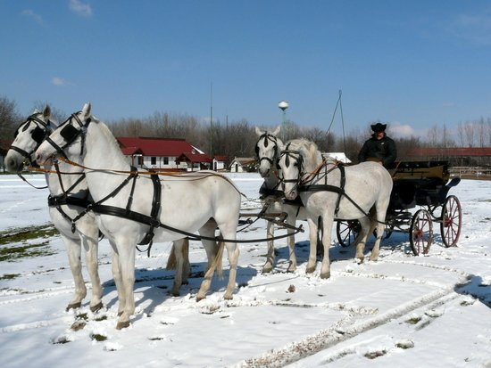 Sweet Travel Private Tours: The most beautiful horses!
