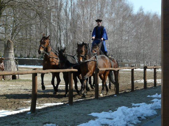 Sweet Travel Private Tours: Unique horsemanship.  See it to experience it!