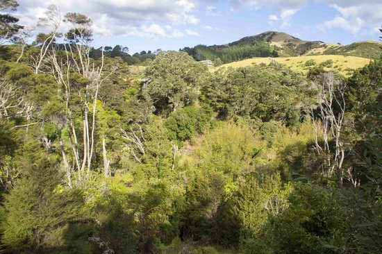 Te Mata Lodge: View from Chalet 4