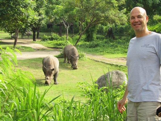 Mara River Safari Lodge: Rhinos in my backyard