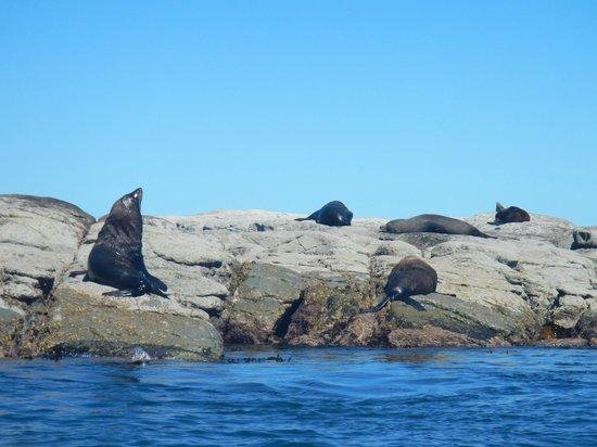 Admiral Court Motel: Seals not far away