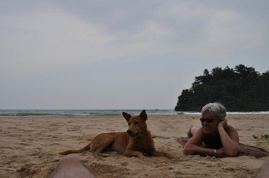 Talalla Retreat: Notre copain le chien sauvage