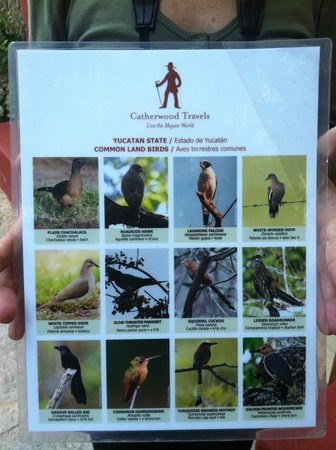 Hacienda San Jose, A Luxury Collection Hotel, San Jose: Perfect for birdwatching.