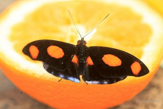 Butterfly World Project: Tropical butterfly