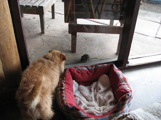 Adobe Mudbrick Holiday Flats: Bella watching the rat