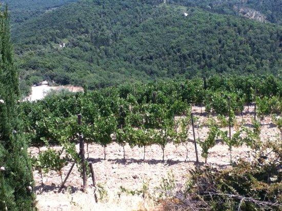 Agriturismo Poggetto: vue des environs
