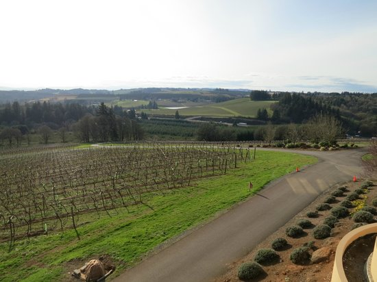 Willamette Valley Vineyards: View from the tasting room