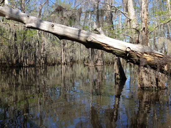 Cajun Encounters: Swamp