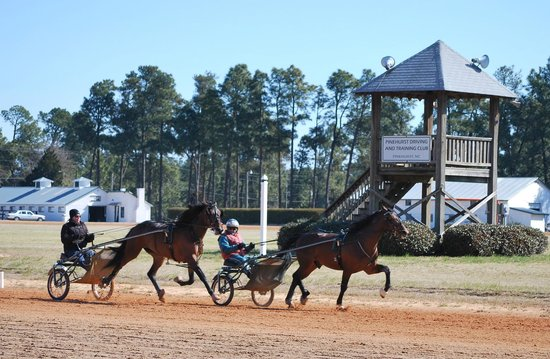 Pinehurst Harness Track: 2 Year olds training on the 1/2 mile track at Pinehurst training centre