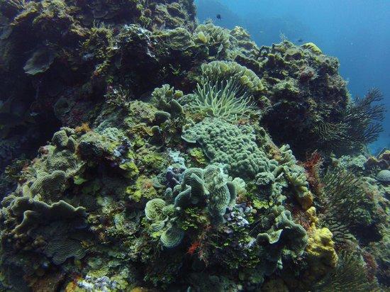 NIrvana Diving School: Jardines de Palancar