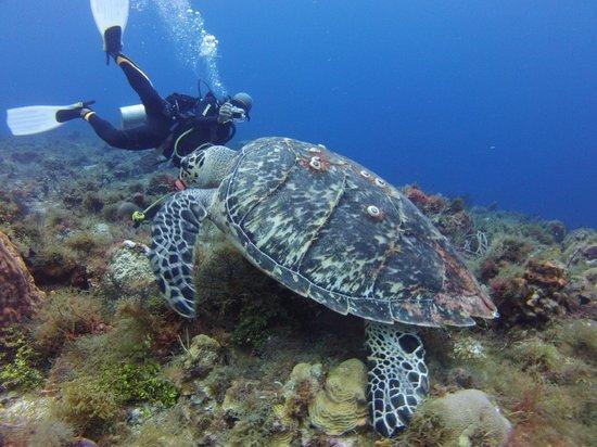 NIrvana Diving School: Instructor Socrates Campa