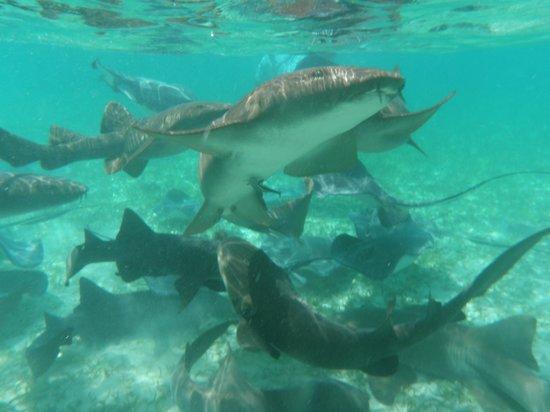 Anda De Wata Tours: Nurse Shark's and Southern Stingray