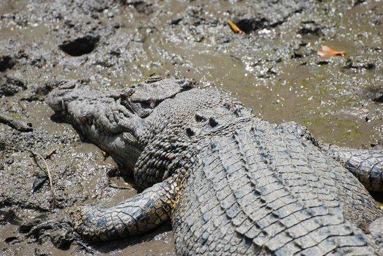 Whitsunday Crocodile Safari: Soakig up the sun...