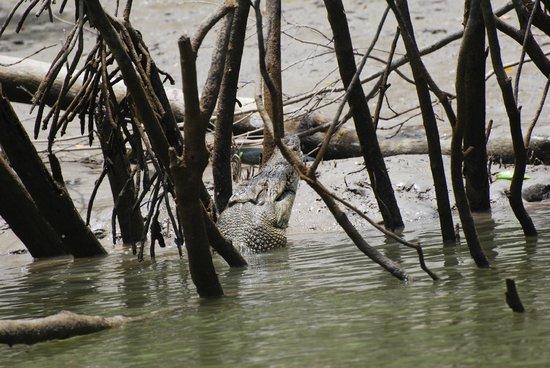 Whitsunday Crocodile Safari: We even got to see one eating a mud crab!!!!!