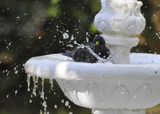 Royal Palms Hotel: Birdbath in gardens