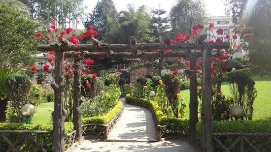 Edassery Eastend: Beautiful gardens at entrance