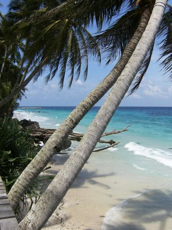 Freddies Santai Sumurtiga: beach view