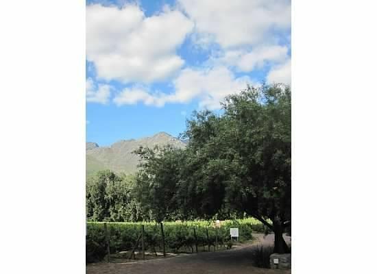 Rickety Bridge Winery: vineyard view