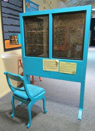 Huka Honey Hive: Bees!!