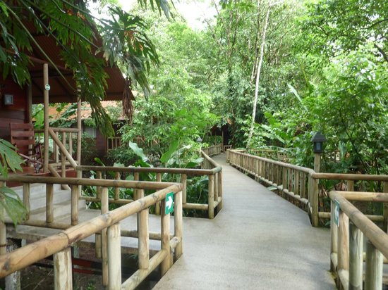 Pachira Lodge: walkways