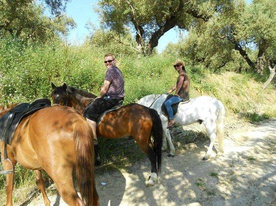 Yanni's Horses