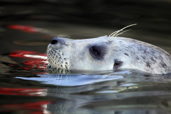 Newport, OR: Seal