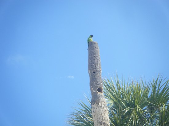 South Beach Condo/Hotel: local birds greet you to the beach :)