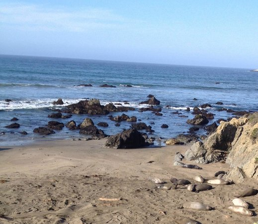 Piedras Blancas: View of beach and Elephant Seals
