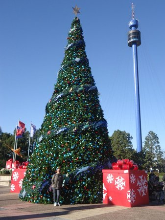 SeaWorld San Diego: Seaworld Christmas Tree