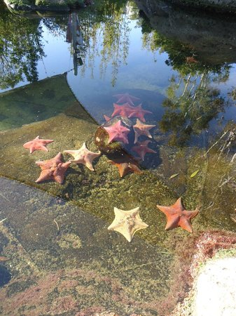 SeaWorld San Diego: Starfish Pool