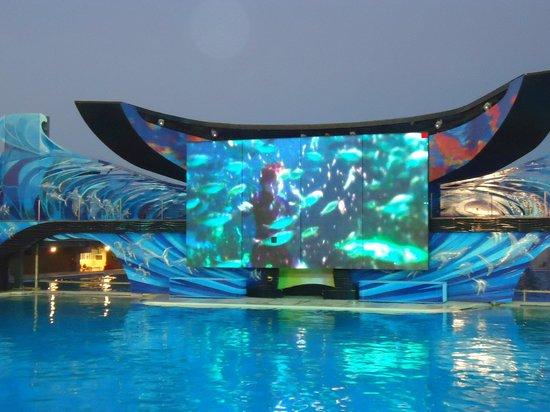 SeaWorld Сан-Диего: Shamu Stadium