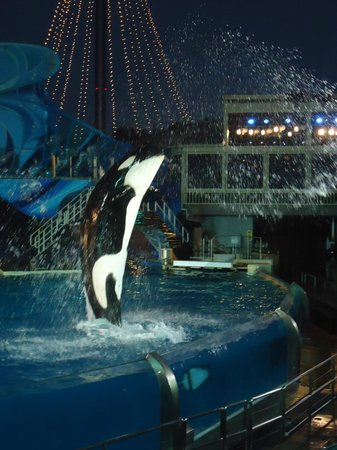 SeaWorld San Diego: Shamu Show