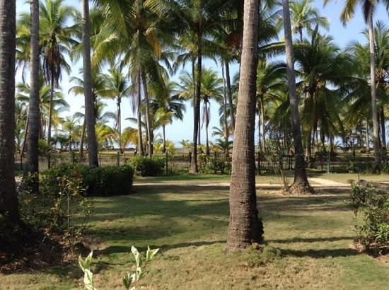 Cocomar Beachfront Hotel and Island Resort: View of palm tree yard, gravel road, & beach beyond all from my viranda.