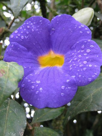 Corcovado Adventures Tent Camp : Beautiful plant life