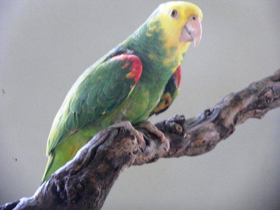 Bird Kingdom: :)