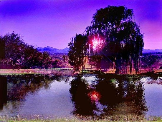 Naco, Arizona: 3 Green, sunrise
