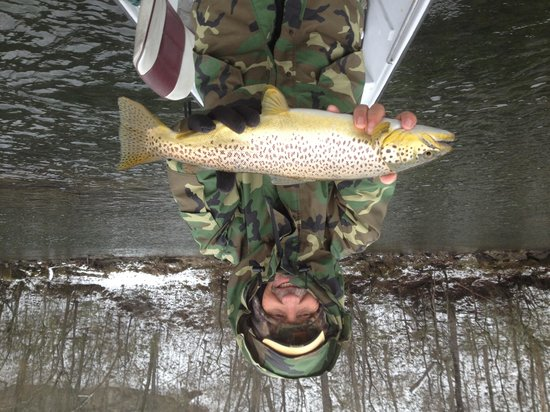 Cotter Trout Dock : My first Brown over 21""