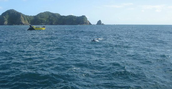 Fullers GreatSights Bay of Islands Day Tours: Dolphin spotting fun!
