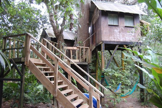 Parrot Nest Lodge: The two tree houses