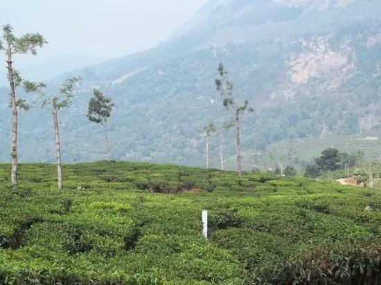 Deshadan Mountain Resorts: tea gardens
